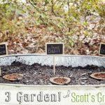 Growing an Herb & Veggie Garden in 3 Easy Steps
