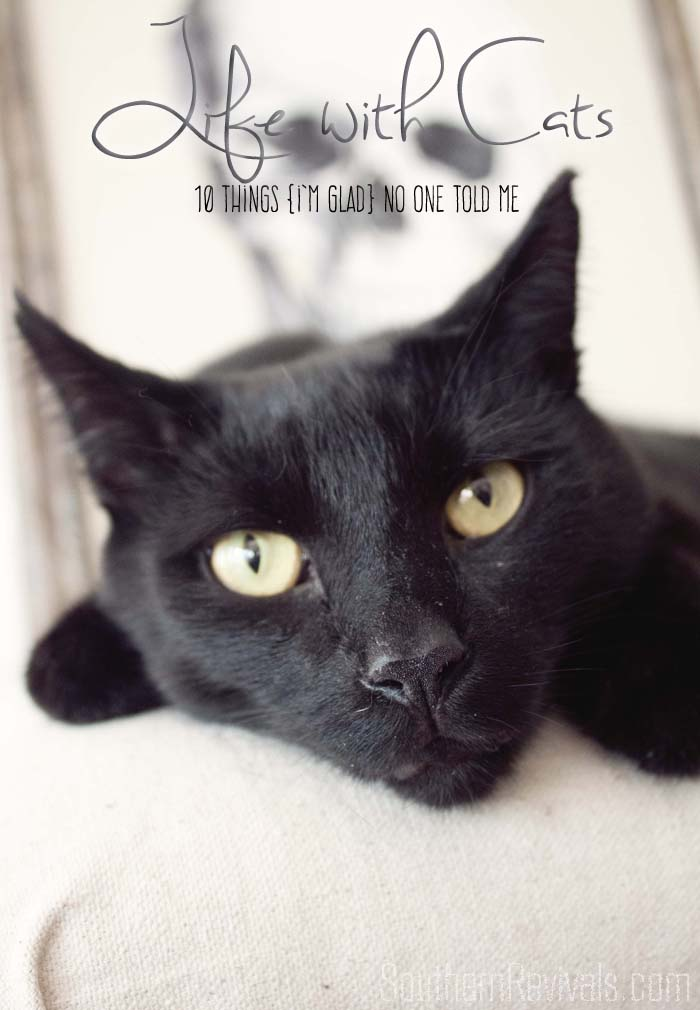 Life with Cats | Things I'm Glad  No One Told Me #cats #pets #FreshStepCats