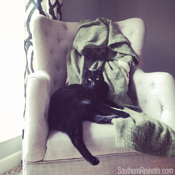 How to Hide the Litter Box #FreshStepCats #ad