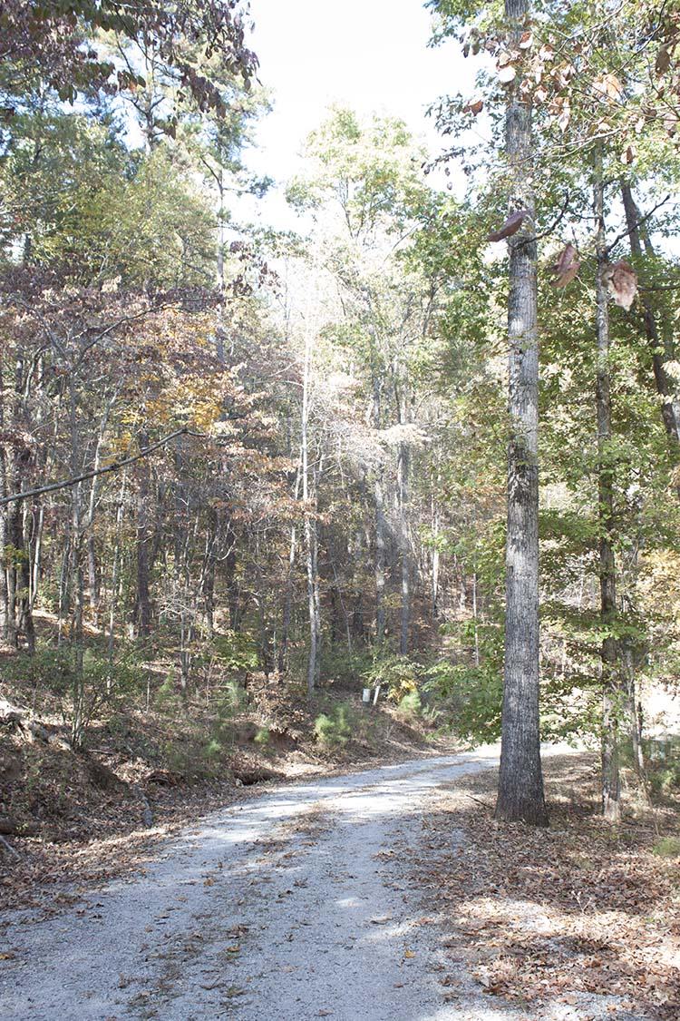 Serenbe woods