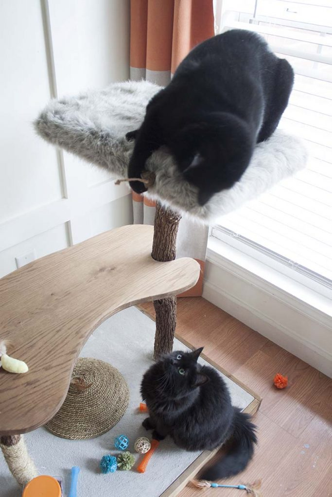 cats on diy cat tree