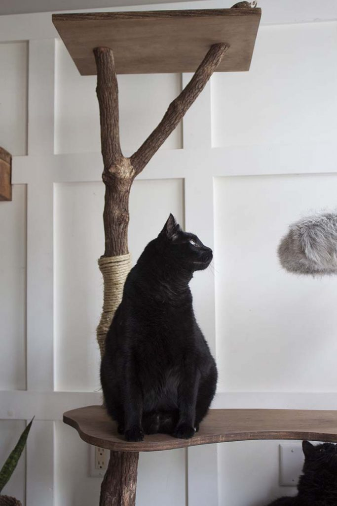 black cat on cat tree
