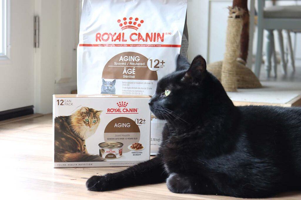 black-cat-royal-canin